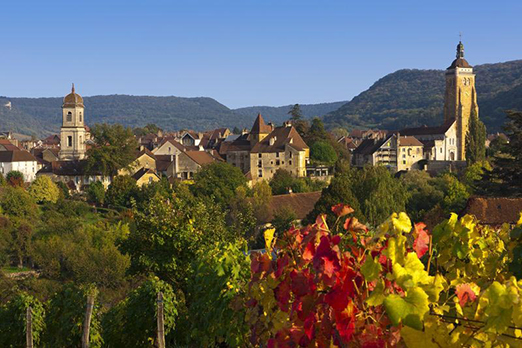Arbois, the vineyard